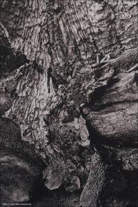 Holz 41 - Carbongraustufendruck